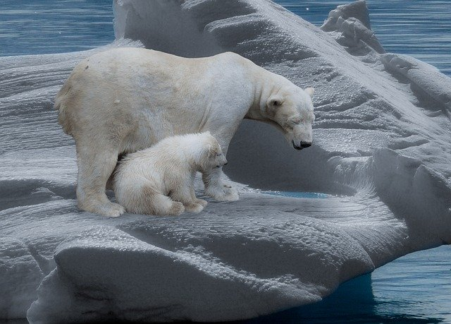 change ice bear